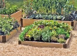 vegetable garden design small dutapetanimuda org