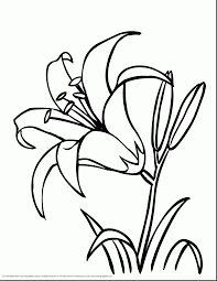 brilliant flower basket coloring page printable with flower