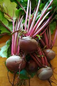 beetroot wikipedia