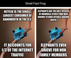 Fact Frog Meme - small fact frog is the best advice animal meme mix of animal and