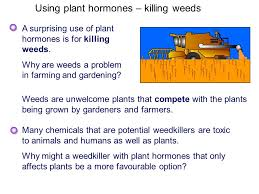 and things that plants get up to ppt download