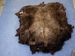 Bison Hide Rug Buffalo Hides Or Buffalo Skins Or Buffalo Robes Or Tanned Buffalo