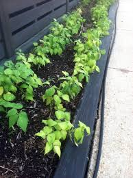 vegetable garden for small spaces gardening in small spaces