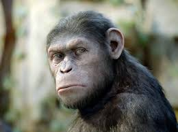 Planet Of The Apes Meme - caesar from planet of the apes will represent moses in sequel