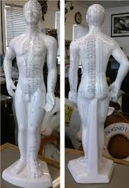 statues for sale phrenology phr fulbdy 89 99 size statues