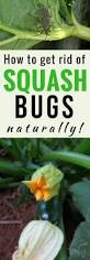 best 25 plant bugs ideas on pinterest