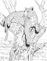 amazing big cat coloring pages 52 with additional coloring pages