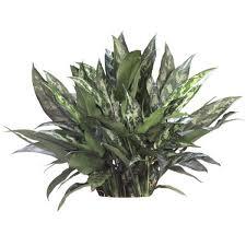 plants low light indoor tropical plants low light interior tropical gardens