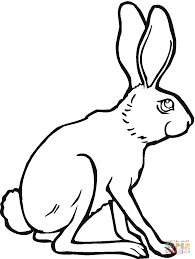 black tailed jackrabbit coloring page free printable coloring pages