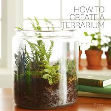 how to create a terrarium