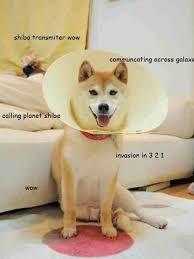 What Breed Is Doge Meme - 46 best shibe images on pinterest funny stuff doge meme and ha ha