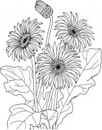 daisy flower coloring pages colorings daisy category