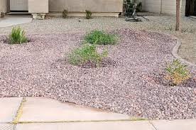 drought tolerant landscaping that looks lush natural and green