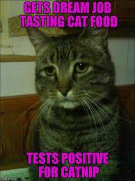 Positive Meme Quotes - depressed cat meme imgflip