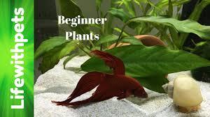 easy to grow beginner aquarium plants youtube