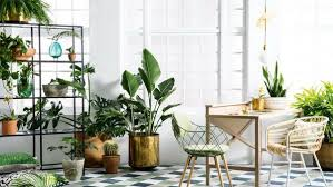 home decor with plants the best ideas for decorating with plants home decor trends