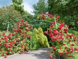 Fertilizer For Flowering Shrubs - rose bushes organic fertilizer 5 3 8