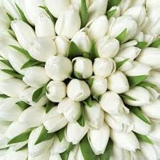 white tulips 754 best white tulips images on white tulips