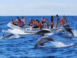 Top 5 Beautiful Places In The World by The Top 5 Places In The World To Swim With Dolphins Worldation