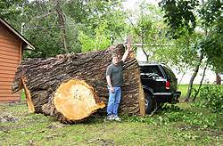 anoka tree trimming st cloud tree removal coon rapids