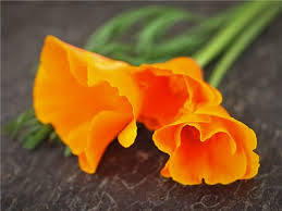 California Poppy California Poppy Or Baker Creek Heirloom Seeds