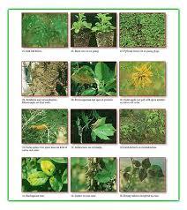 Plant Diseases Identification - disease identification superior lawn care
