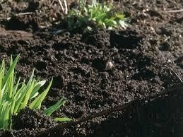types of garden pests bugs that destroy plants hgtv