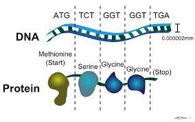 designing of nanotools u2013 protein enhancements with genetic