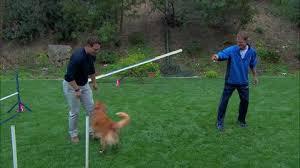 Backyard Agility Course Terry Simons Dog Agility Course Home U0026 Family Hallmark Channel