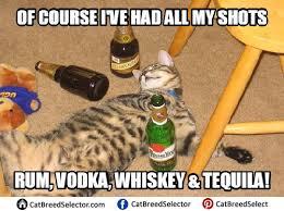 Drunk Cat Meme - cat memes cat breed selector