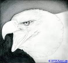 how to draw a bald eagle step by step birds animals free