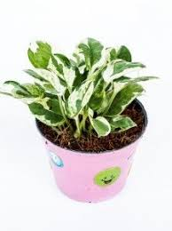 Fragrant Indoor Plants Low Light - indoor house plants with names and pictures indoor house plants