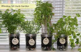 Window Sill Herb Garden Designs Indoor Windowsill Herb Garden Decorating With Windows