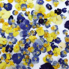 edible blue flowers dried pansy cake topper edible flowers supply real blue lemon