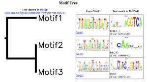 Meme Motif - dna motif fbn1 and marfan syndrome