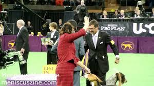 affenpinscher joe best in show 2013 westminster dog show banana joe