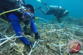 mars tanam laba laba rehabilitasi terumbu pulau badi antara