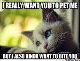 Cat Problems Meme - first world cat problems by 4evaalone meme center
