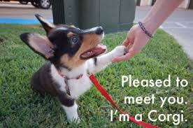 Cute Puppies Meme - best corgi memes of all time