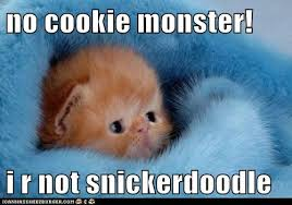 Cookie Monster Meme - no cookie monster i r not snickerdoodle lolcats lol cat memes
