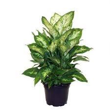 indoor plants garden plants u0026 flowers the home depot
