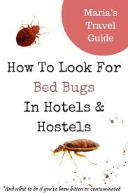 Bed Bugs What To Do Best 25 Bed Bugs Hotels Ideas On Pinterest Essential Oil