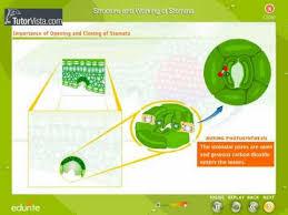how do stomata work u2013 plant stomata encyclopedia