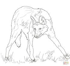 maned wolf coloring page free printable coloring pages