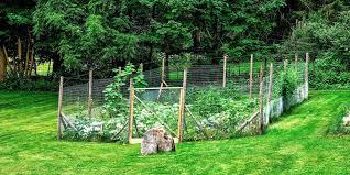 Diy Garden Fence Ideas Diy Garden Fence Ideas Homedesignlatest Site
