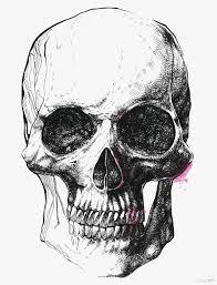imagen blanco y negro en illustrator simple blanco y negro esqueleto illustrator simple blanco y negro