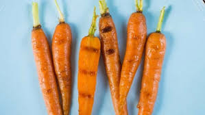 carrot ring lucky carrot woman finds lost engagement ring after 13 years