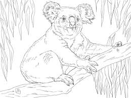 koala sits branch coloring free printable coloring pages
