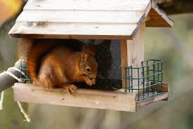 comment fabriquer un arbre a chat nourrissage des écureuils roux besoin de conseils écureuil