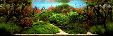 Mountain Aquascape 11 Mind Blowing Aquascapes That Will Enchant Your Socks Off